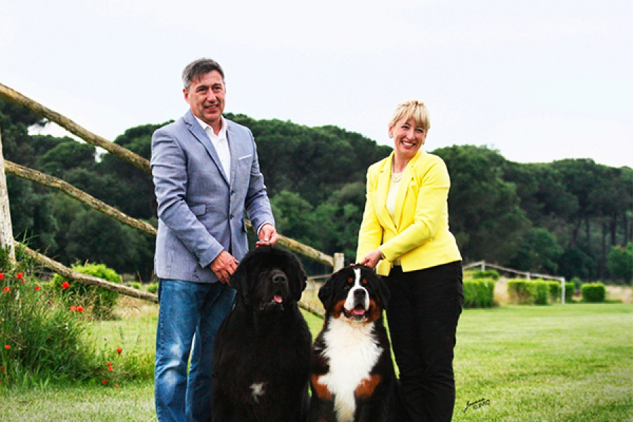 Interview with Mrs. & Mr. Mauro • Starry Town Bernese Mountain Dogs