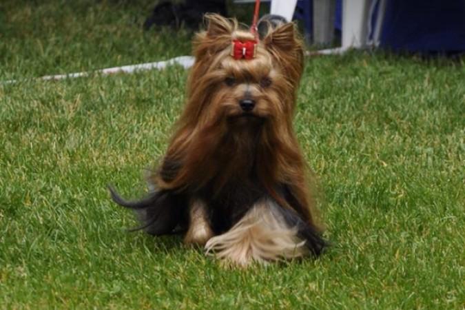 Life with Dogs • Nina Grasmo