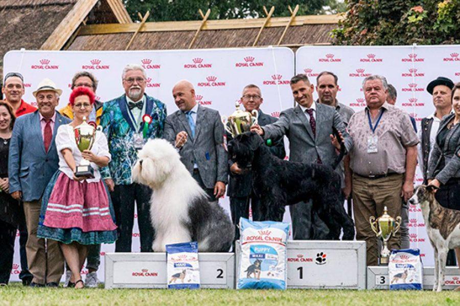BIS at the IDS Hódmezővásárhely – 7/9/2019
