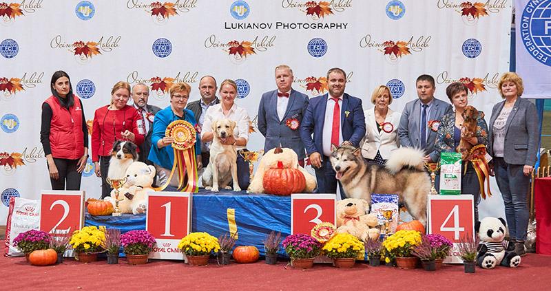 BIS at the IDS Lviv • 19/10/2019