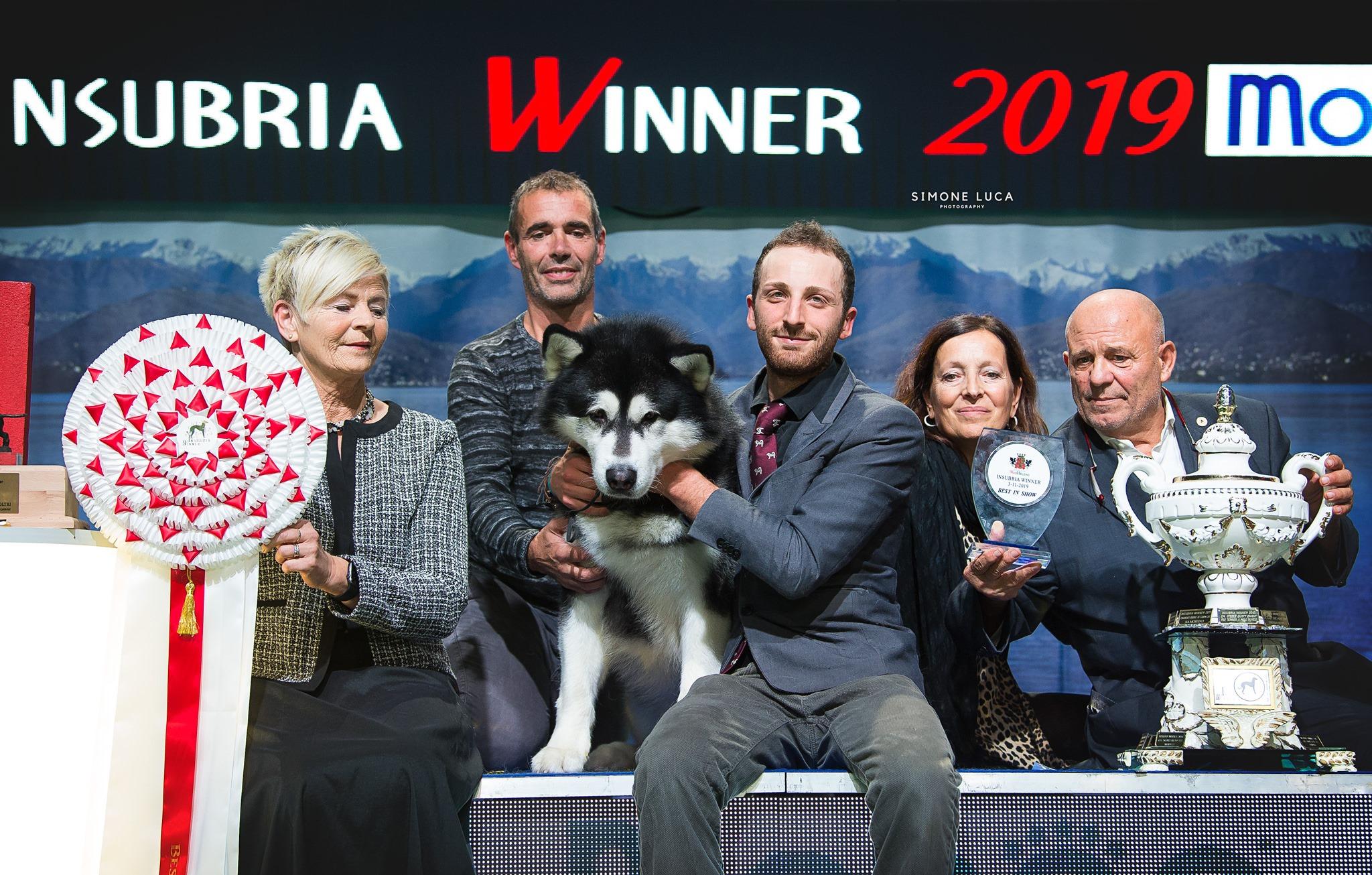 BIS at the Insubria Winner • 3/11/2019