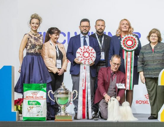 BIS at the ENCI winner • 15/12/2019