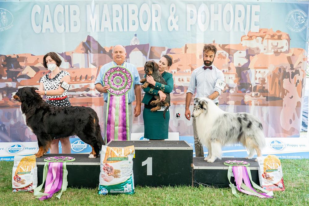 BIS at the IDS Maribor  • 24/7/2021