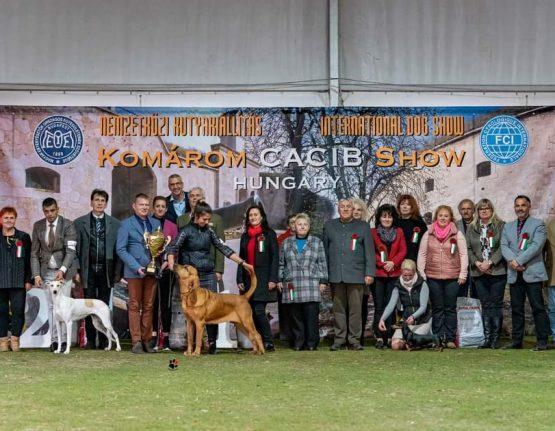 BIS at the Komarom – Crufts Derby  • 22/10/2021