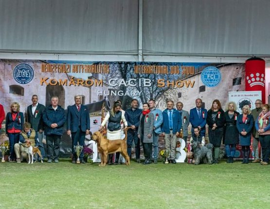 BIS at the Komarom – Crufts Derby  • 23/10/2021