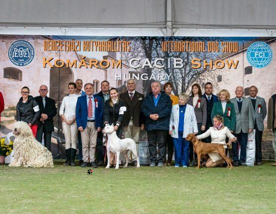 BIS at the Komarom – Crufts Derby  • 24/10/2021